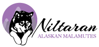 Niltaran-Alaskan-Malamutes-logo-200px